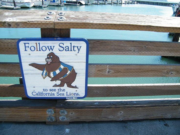 800px-Follow_Salty
